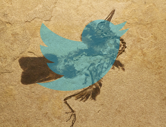 twitter-fossile