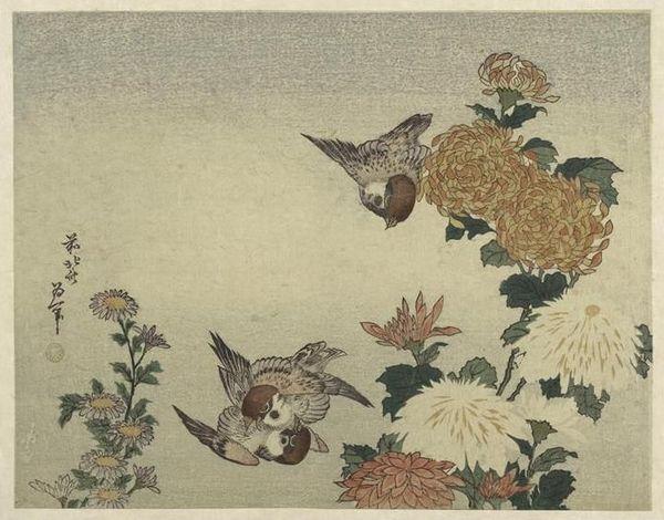 Moineaux et chrysanthèmes